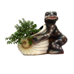 Shankh Shape Planter With Frog