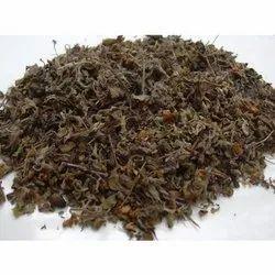 Holy Shyama Tulsi  Dry Leaf