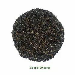 Cofs 29 Fodder Seed Multicut/Perennial Fodder Sorghum/Jowar) Seeds