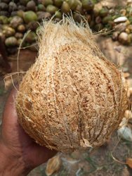 A Grade Semi Husked Coconut, Packaging Size: 50 Kg, Coconut Size: Large
