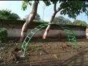 Playground Rainbow  Climbler