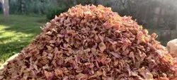 Rosa Damasenia Dried Rose Petals, Packaging Size: 1kg