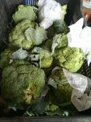 Chinese Cabbage A Grade Green Broccoli, Packaging Type: Carton, Packaging Size: 10 Kg