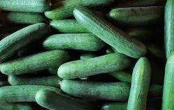 Green Cucumber, Packaging Size: 20 Kg