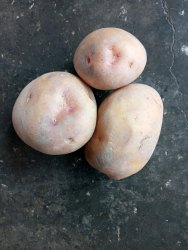 Patato Seds S4 (2nd  Generation)