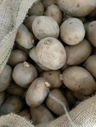 KUFRI PUKHRAJ (C-166) A Grade Potato Tubers, Packaging Type: Gunny Bag, Packaging Size: 50 Kg