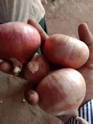 50 kg Fresh Onion