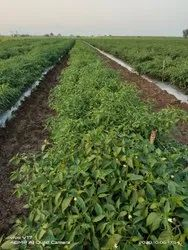 White Agriculture PET Wire