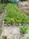 Landscaping Plants Trees