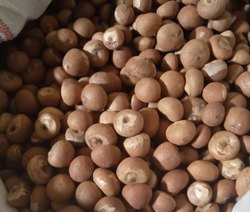 Betel Nut, 80