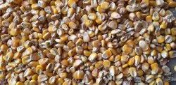 Yellow Maize Food Items (maize) BD quality, Organic