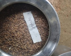 Natural Black Kalabat Paddy, For Agriculture