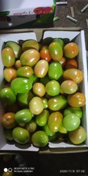Indian A Grade Export Quality Green Tomato Nashik Mumbai