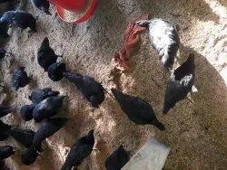 Karoknath Hen