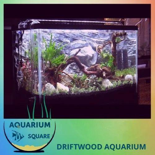 Driftwood Table Aquarium
