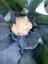 White Cauliflower Sweta