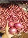 A Grade Madhya Pradesh Onion, Packaging Size: 50 Kg, Onion Size Available: Medium