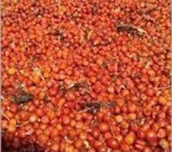 Glorisa Superba Seeds