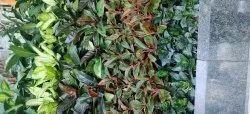 Home Fume-based Treatment Garden Pest Control