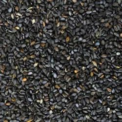 Dried Black Sesame Seeds, For Cooking, Packaging Type: Loose
