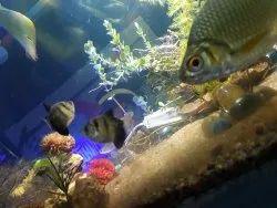 fish aquarium price