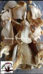 Natural Maharashtra Dried Oyster Mushroom, Packaging Type: Plastic Bag, Packaging Size: 1 kg