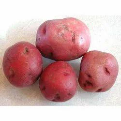 A Grade Fresh LR/ red Potato
