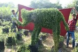 Natural Garden Contractor, Mumbai, Coverage Area: 3000 to 10000 Square Feet