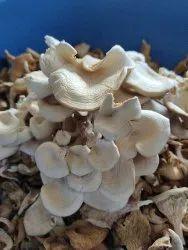 Organic Maharashtra Dry Oyster Mushroom, Packaging Type: Plastic Bag, Packaging Size: 5 Kg