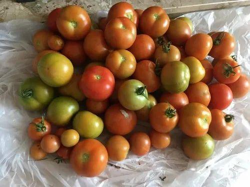 Plant Grow Bag /Organic Grow Bag/Geo Febric Grow Bag