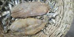 Kendai Fish