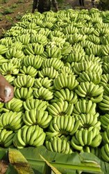 a Grade Fresh Banana 1 Class