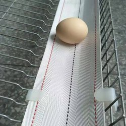 Egg Collection Belt
