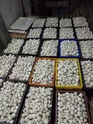 uttar pradesh white button mushroom, Packaging Type: Box