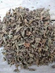 Tulsi Whole Plant