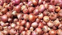 A Grade Maharashtra Onion