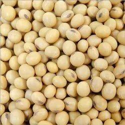 Soybean Seeds, Packaging Type: Bag, Packaging Size: 30 Kg