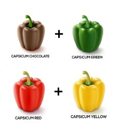 Hybrid Green Capsicum seed, Packaging Type: 10 Gm, Packaging Size: 5 Kg Above