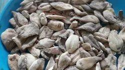 Whole Dry Suranjan Meetha Colchicum Luteum, For Ayurvedic