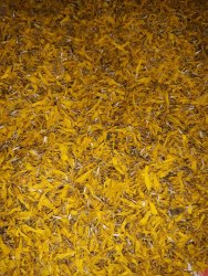 Calendula Petals, Packaging Size: 10kg