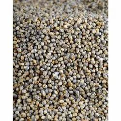 White Pearl Millet Bajra, High in Protein