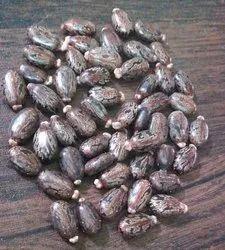 Brown Castor Seeds, 50 Kg