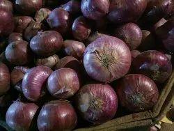 Maharashtra Dry Onion, Packaging Size: 50 Kg, Onion Size Available: Medium