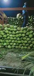 A Grade Andhra pradesh Tender Coconut, Coconut Size: Large
