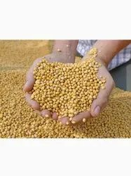 Pulses And Beans, Dal