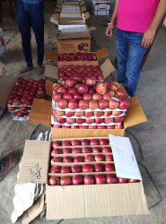 Himachali A Grade Fresh Apple, Packaging Size: 20 Kg, Packaging Type: Carton