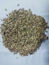 Milk Thirstle - Silybum marianum, Packaging Type: Bag, Packaging Size: 50 Kg