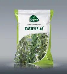 Kashvin-66 Sesamum