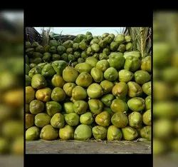 A Grade Fresh Green Coconut, Packaging Size: 50 Kg, Coconut Size: Large