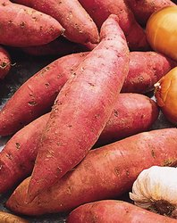 A Grade Pan India Sweet Potatoes, Packaging Type: Gunny Bag, Packaging Size: 20 Kg